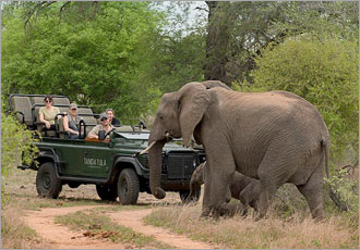 In search of the Big 5 at Tanda Tula Field Camp