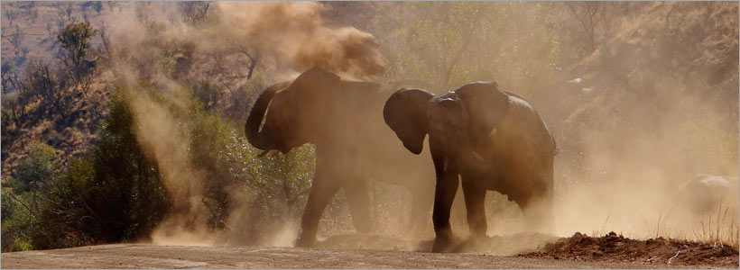 One Day Pilanesberg Big5 SAfari - the best one day tour from Joburg