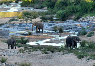 Seeking out the elephants at the river crossing